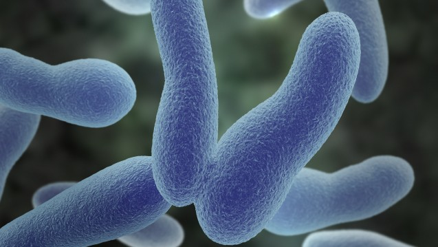 Das Bakterium Corynebacterium diphtheriae – nach den Entdeckern auch Klebs-Loeffler-Bazillus genannt – löst die Diphtherie aus. (Foto: Sagittaria / Fotolia)