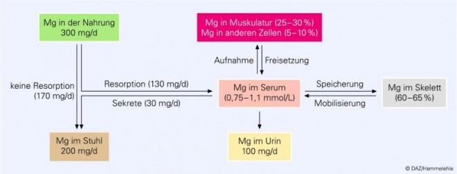 Eder_Magnesium_01.EPS