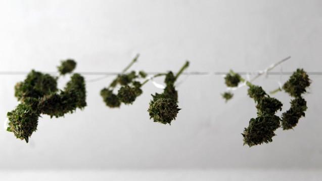 Der kontrollierte Verkauf von Cannabis in der Apotheke ist Teil eines Projekts, um die Macht der Drogenbosse einzudämmen. (Foto: demotix)