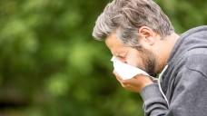 Die Heuschnupfensaison hat für viele Allergiker schon begonnen. (m / Foto: Robert Kneschke / stock.adobe.com)