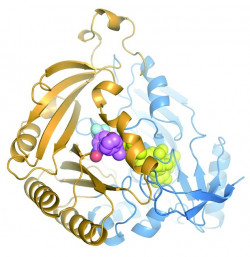D272012_pri_tuberkulose.jpg