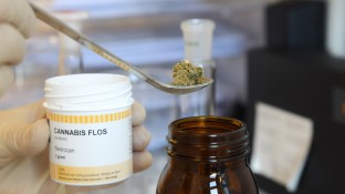 Frankfurt startet Cannabis-Projekt mit Apothekern