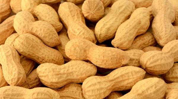 Positive Daten für Therapie gegen Erdnuss-Allergie