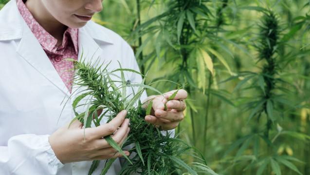 Apotheken sollen Cannabis zukünftig auf BtM-Rezept abgeben. (Foto: stokkete / Fotolia)