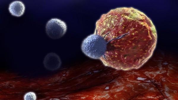 FDA will schnelle Zulassung von Krebsarzneimittel Avelumab