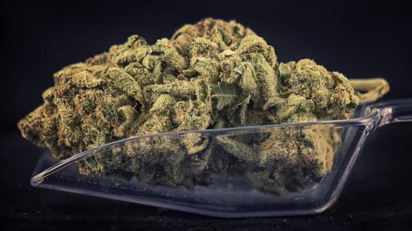 Cannabis: Zwischen Goldgräberstimmung und Zurückhaltung