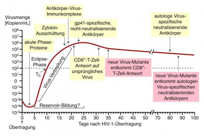 D4811_du_HIV_Abb3.jpg
