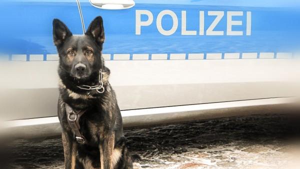Polizeihund stoppt Apotheken-Einbrecher