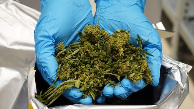Bionorica, Apothekern vor allem als Hersteller von Sinupret und Co. bekannt, will in Zukunft Cannabis in Deutschland anbauen. (Foto: Bionorica SE / dpa)