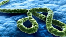 Impfstoffstudien gegen das Ebola-Virus verlaufen vielversprechend. (Bild: psdesign1/Fotolia)